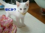 06.07.05ぱじゃま-1.jpg