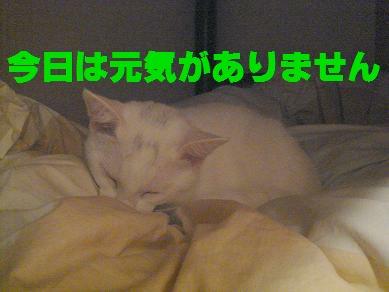 06.10.29�D.JPG