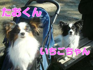 06.11.15たお苺.jpg