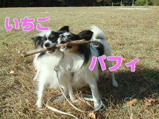 06.11.15苺パフェ.jpg