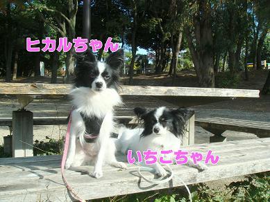 06.11.15苺ヒカル.jpg